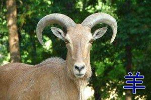Поздравить с годом козы 2015 прикольно